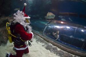 Diving Santa and sand tiger shark at Blue Planet Aquarium