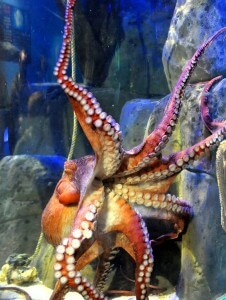 newquay Sea Life Center Sucker Week