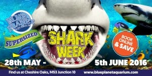 SharkWeekwebslider - May 2016