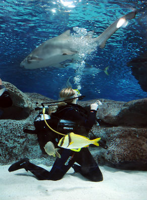 Shark Awareness, full day courses | Blue Planet Aquarium
