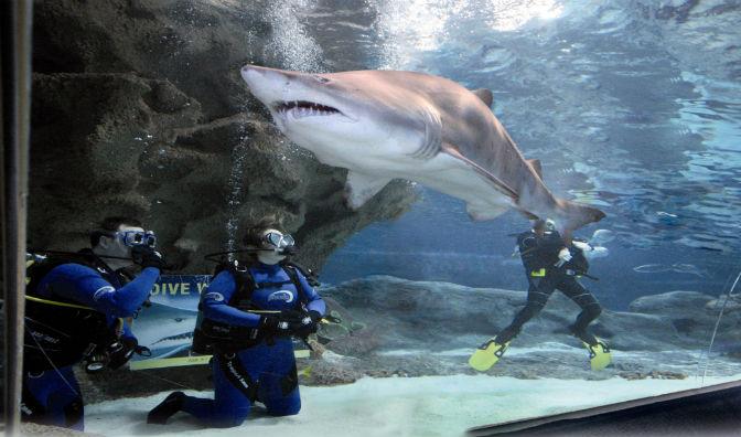 Diving with Sharks: Qualified Divers | Blue Planet Aquarium