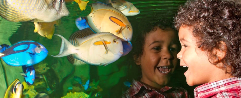 Up Close Encounters  & Family Fun at Blue Planet Aquarium
