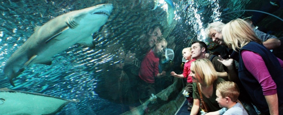 Take the Tunnel!  Explore the depths from the longest Underwater Walk!