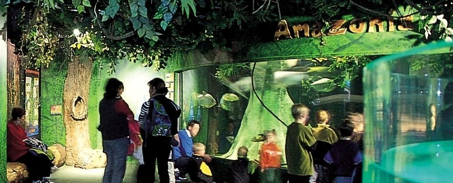 Come explore the sights and sounds of our  Rainforest