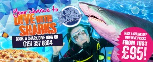 Dive with Sharks Web Banner (2) - October 2015