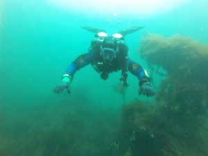 tom dive image