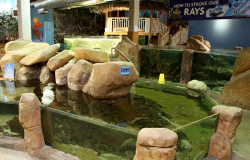 Rock pools rock