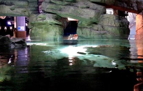 Explore coral cave