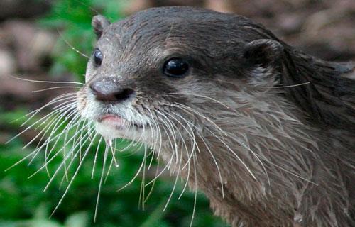 Otter Enclosure
