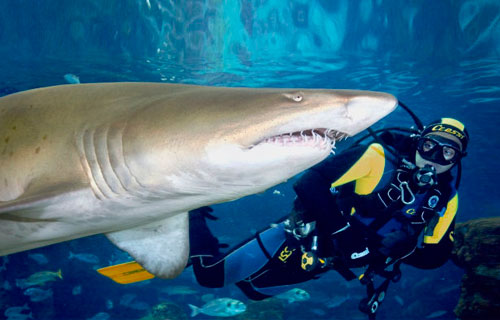Ultimate Adult Shark Dive Encounter