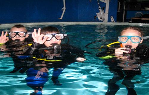 Ultimate Junior Shark Dive Encounter