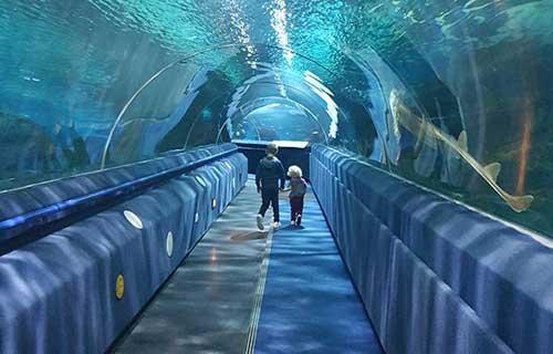 Shark Tunnels